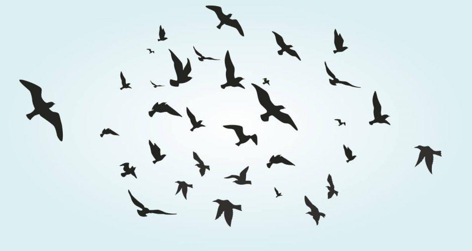Για χωλ - Αυτοκόλλητο τοίχου με σμήνος από πουλιά (flock of birds)